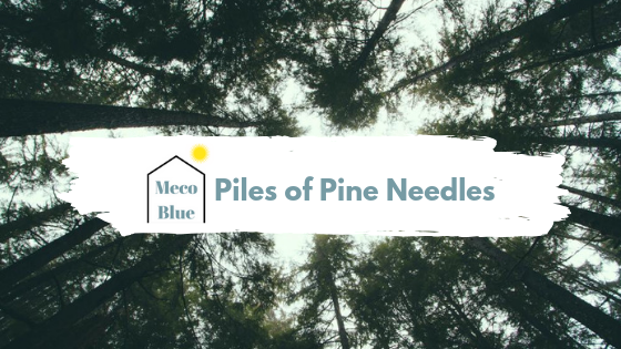Piles and Piles of Pine Needles